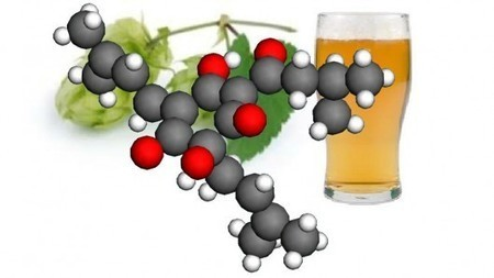 Beer compounds could hold the key to better pharmacueticals | Longevity science | Scoop.it