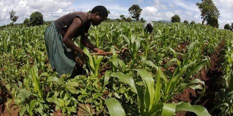 """""""Si les multinationales payaient leurs impôts, l'Afrique n'aurait besoin d'aucune aide""""   Afrique: développement durable et environnement   Scoop.it"""