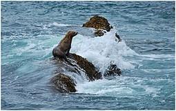 2012, année du retour pour 5 espèces menacées | Chuchoteuse d'Alternatives | Scoop.it
