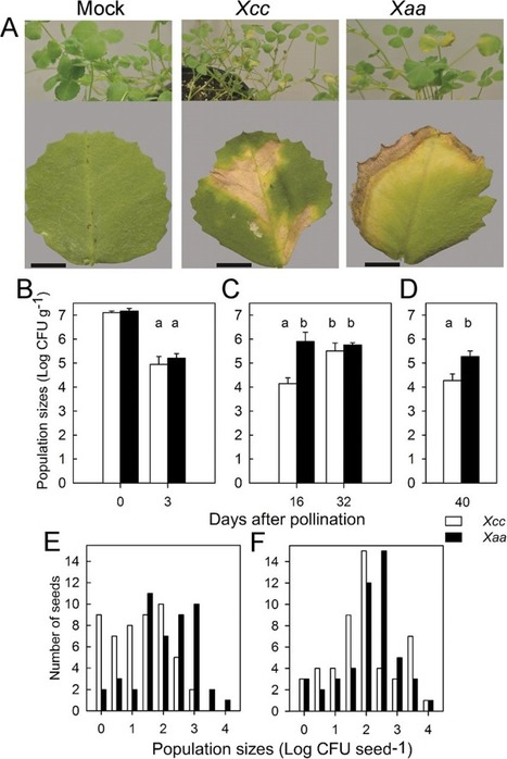 J. Exp. Bot.: Identification of a molecular dialogue between developing seeds of Medicago truncatula and seedborne xanthomonads (2015) | Effectors and Plant Immunity | Scoop.it