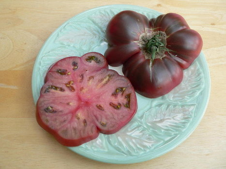 Cherokee Purple: The Story Behind One Of Our Favorite Tomatoes | Permaculture, Horticulture, Homesteading & Green Technology | Scoop.it