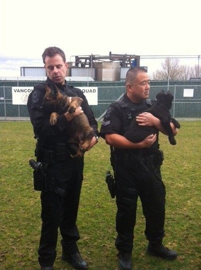 Legal group says police dog oversight needs more teeth - Am730 Vancouver Traffic News | Info Carousel | Scoop.it