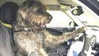 Why this dog is learning to drive | Daily Crew | Scoop.it