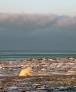 In atto la sesta estinzione di massa: addio leoni, lupi e squali - Ambiente & Energia - News - Virgilio GO GREEN | Italica | Scoop.it