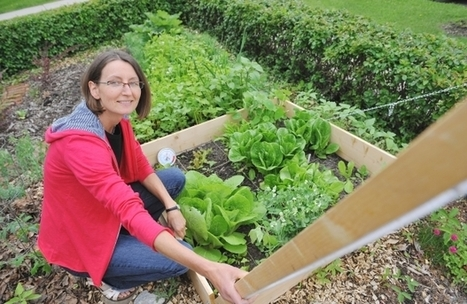 Growing numbers of Edmontonians plant edible front yards | Unit 3 - Health, Wellness, & the Environment | Scoop.it