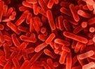 [Dossier] De la bactérie à l'homme Le règne des Monères | Toxique, soyons vigilant ! | Scoop.it
