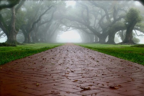 Oak Alley Fog | Oak Alley Plantation: Things to see! | Scoop.it