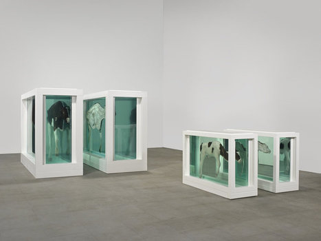 Mother and Child (Divided) - Damien Hirst | Art and… | Scoop.it