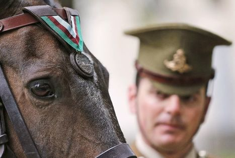 US Marine Corps horse honored for Korean War valor | Archaeology, Culture, Religion and Spirituality | Scoop.it