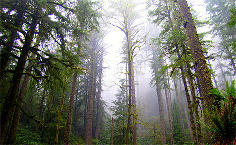 State Land Board approves selling Elliott State Forest | Timberland Investment | Scoop.it