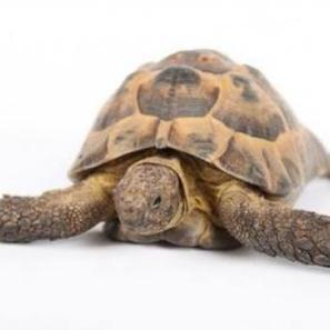 Comment faire pour que ma tortue soit relax ? - Z comme Zoo | Animalerie en ligne | Scoop.it