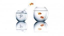 La valeur de prendre du recul avec un groupe de co-développement | The facilitator online newspaper | Scoop.it