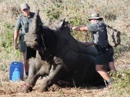 How Luke, 9, saved a rhino | Help save our Rhino | Scoop.it