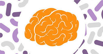 How Gut Bacteria Protect The Brain | Amazing things - sometimes science related | Scoop.it