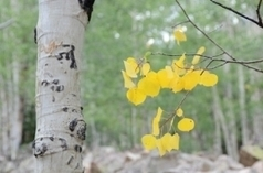 Drought Might Affect Fall Foliage | The Miracle of Fall | Scoop.it
