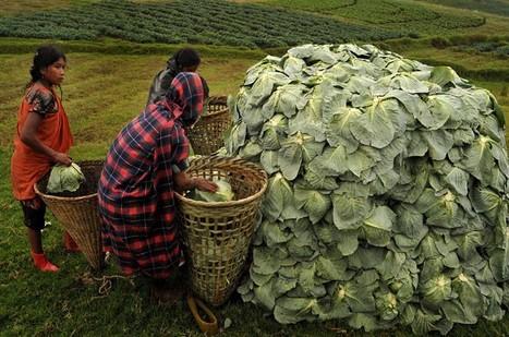 L'accaparement des terres : l'Inde en guerre contre ses paysans | Questions de développement ... | Scoop.it