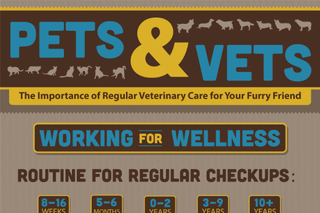 11 Great Veterinary Marketing Ideas - BrandonGaille.com | Digital-News on Scoop.it today | Scoop.it