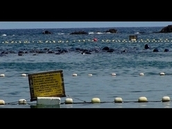Fifty pilot whales killed in Taiji | The Wild Planet | Scoop.it
