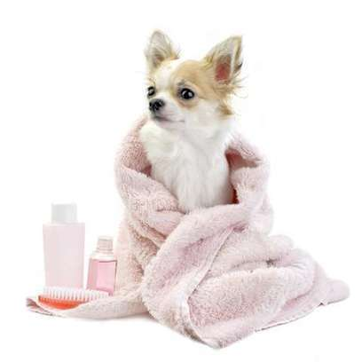 Get Your Dog Bathed In Great Luxury | Good Dog and Pet Washing Service | Scoop.it