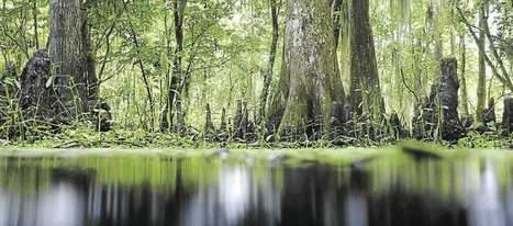 Le «Giec de la biodiversité» pourra-t-il enrayer la disparition des espèces ? | Ecologie | Scoop.it