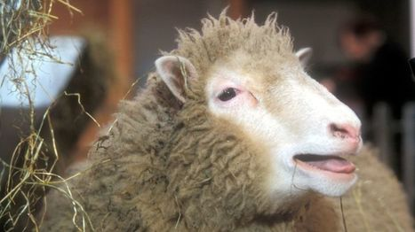 Twenty years on from Dolly the sheep - BBC News | The future of medicine and health | Scoop.it