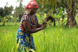 L'Année internationale de l'agriculture familiale s'achève après avoir imprimé un élan remarquable à ce secteur vital - FAO | Agricultures familiales | Scoop.it
