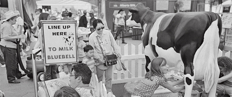 The Calgary Stampede at 100   Calgary Stampede Through the Years   Scoop.it