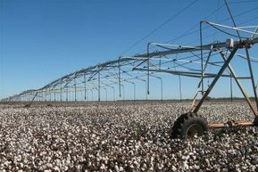 Release of new sustainability report puts cotton's credentials on record - ABC Online | Sustainability | Scoop.it