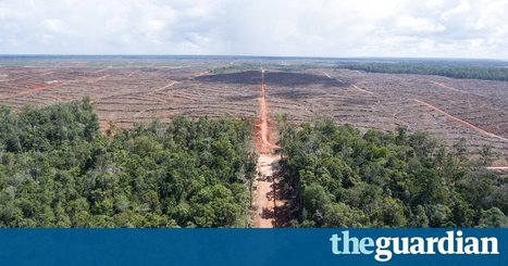 Korean palm oil firm accused of illegal forest burning in Indonesia | Confidences Canopéennes | Scoop.it