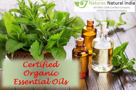 7 Magnificent Organic Essential Oils Perfect for Massage | Natures Natural India - Bulk Essential oils Manufacturer and Suppliers | Scoop.it
