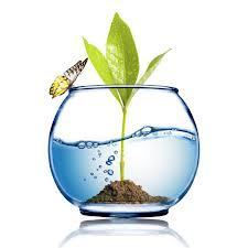 Environment in Islamabad | QP Corp | Environment in Islamabad | Scoop.it