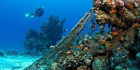 Dive Training: 9 Tips for Avoiding Underwater Entanglements | KNOWING............. | Scoop.it
