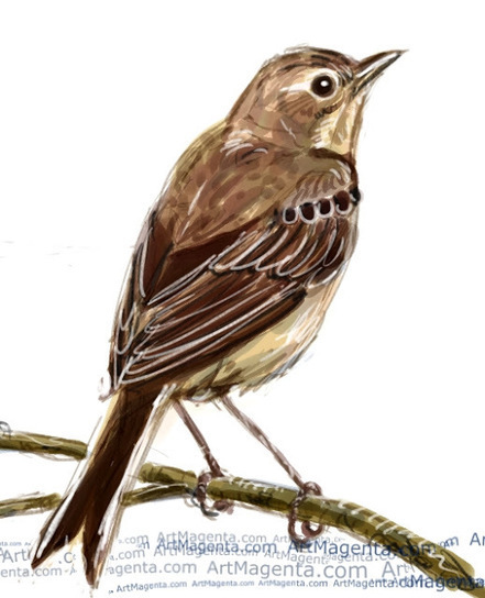 Bird of the Day: Tawny pipit   Birding in the news   Scoop.it