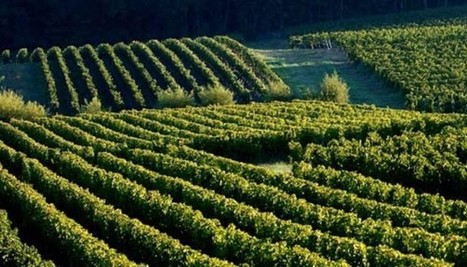 Cadillac: Balades Vendanges rando au cœur du vignoble | Le vin quotidien | Scoop.it