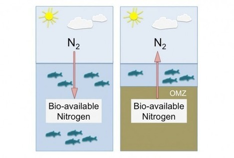 Nitrogen problem in the Ocean limits net productivity | Deep Ocean | Scoop.it