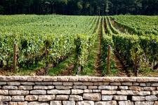 Prix des vignes : d'énormes écarts entre le sommet et la base   vin   Scoop.it