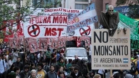 Les Argentins remportent une victoire sur Monsanto | Matière agricole | Scoop.it