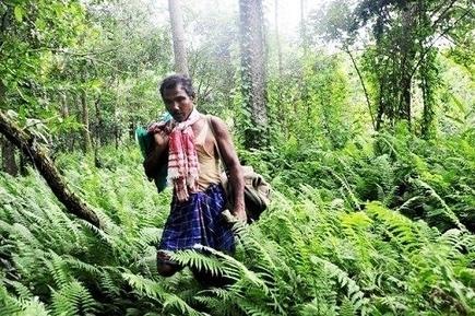 Muž ktorý vypestoval 500-hektárový les za 30 rokov | Milujem prírodu | Scoop.it