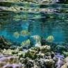 environnement de la polynésie