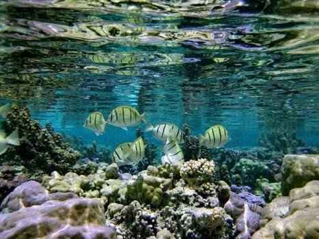 Protection de l'Environnement et  développement durable : une priorité  pour la Polynésie | environnement de la polynésie | Scoop.it