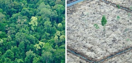 Clear-Cutting Sumatra: Rainforest Pulp Used in German Children's Books - SPIEGEL ONLINE | The Glory of the Garden | Scoop.it