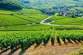 La Bourgogne entre gastronomie et oenologie | Epicure : Vins, gastronomie et belles choses | Scoop.it
