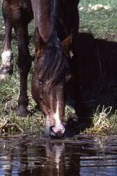 When Your Horse Needs Electrolytes from EQUUS | Equisearch | Today's Horse Sense | Scoop.it