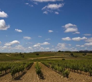 Ora anche i disabili sulle strade del vino | Turismo Accessibile | Scoop.it