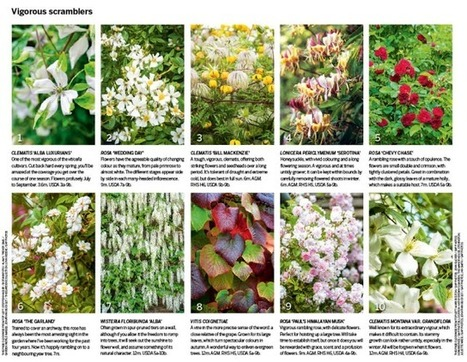 30 of the best climbing plants | Gardens Illustrated | Informations vertes | Scoop.it