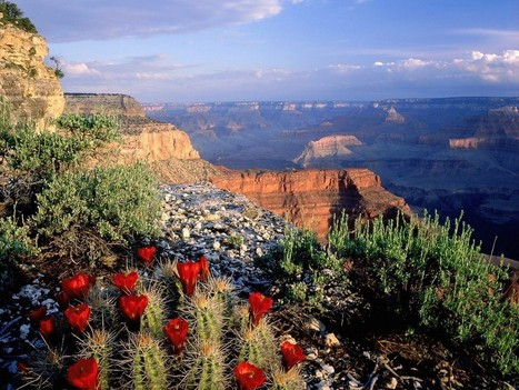 Grand Canyon National Park, Arizona < Hiking | Travel guide | Scoop.it