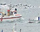 Norway keeps whaling quota unchanged for 2014 | Sustain Our Earth | Scoop.it