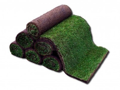 How to choose a Turf Supplier in Sydney from selected groups | Lawn Turf Suppliers | Scoop.it