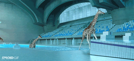 Watching realistic CGI giraffes dive into a pool is pure ridiculous fun | The Secret to Creativity is... | Scoop.it