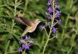 Climate Change Miscues May Shrink Species' Outer Limits | Climate change challenges | Scoop.it